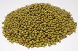 緑豆 (500g)